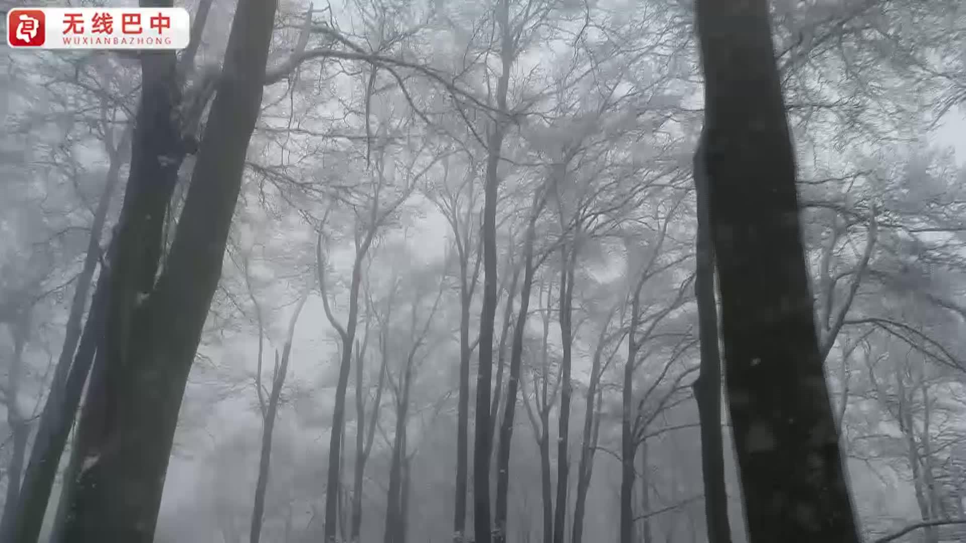 巴中光雾山:八百里雾凇奇观