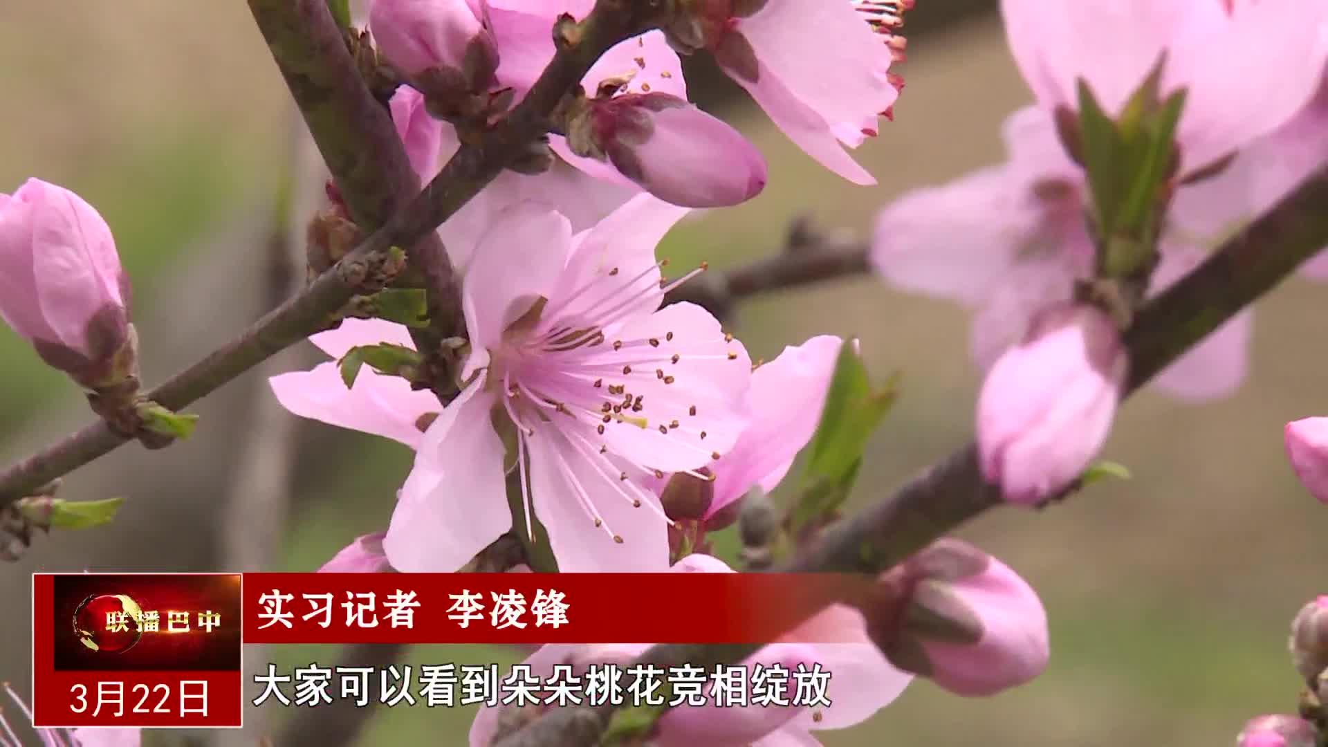 蘇山坪:桃花春色暖先開