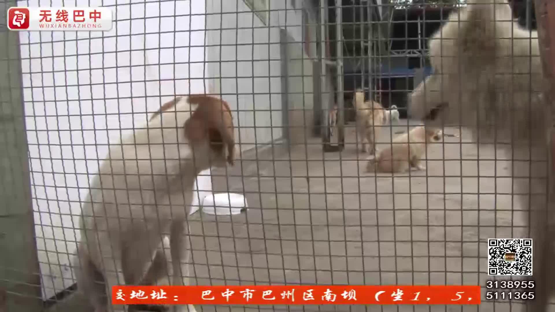 市流浪动物救助中心:两年救助200多只猫狗 ?呼吁市民领养代替购买