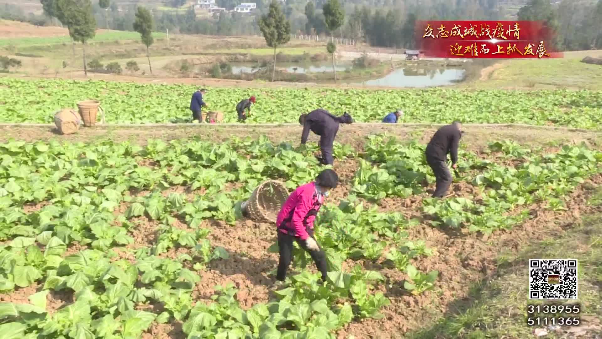三万斤蔬菜援抗疫一线